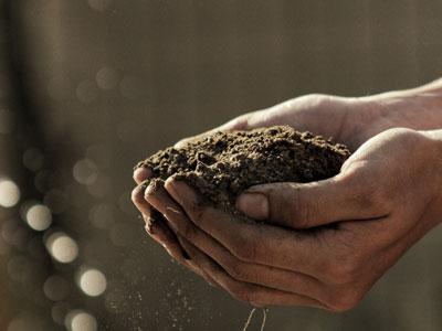農家さんの手
